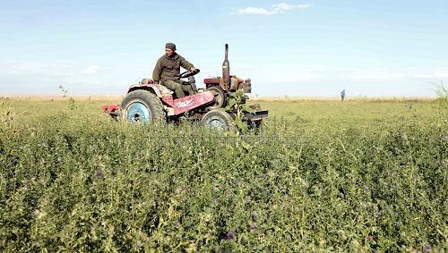 新疆阿勒泰牧民抢收牧草